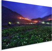 De velden van Hehuan in de nacht met mooie alocasia bloemen Plexiglas 180x120 cm - Foto print op Glas (Plexiglas wanddecoratie) XXL / Groot formaat!
