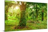 Plantage van palmolie bij het Aziatische Nationaal park Gunung Leuser in Indonesië Aluminium 180x120 cm - Foto print op Aluminium (metaal wanddecoratie) XXL / Groot formaat!