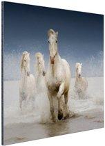 FotoCadeau.nl - Witte paarden in het water Aluminium 120x80 cm - Foto print op Aluminium (metaal wanddecoratie)