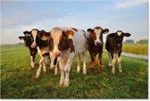 Koeien - Koe - Schilderij op Canvas