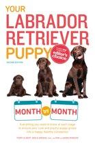 Your Labrador Retriever Puppy