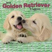 Golden Retriever Puppies Kalender 2019
