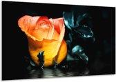 Glasschilderij Roos | Geel, Oranje, Zwart | 120x70cm 1Luik | Foto print op Glas |  F003859