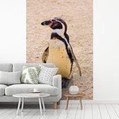 Fotobehang vinyl - Humboldtpinguïn aan de kust breedte 240 cm x hoogte 360 cm - Foto print op behang (in 7 formaten beschikbaar)