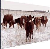 Kudde koeien in een sneeuwveld Aluminium 30x20 cm - Foto print op Aluminium (metaal wanddecoratie)
