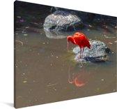 Rode ibis staat op een rots in het water Canvas 30x20 cm - klein - Foto print op Canvas schilderij (Wanddecoratie woonkamer / slaapkamer)