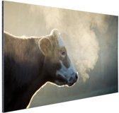Koe bij zonsopgang Aluminium 90x60 cm - Foto print op Aluminium (metaal wanddecoratie)