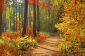 Fotobehang - Bos in herfst - 418x260 cm. Vliesbehang 150 grams A-Kwaliteit. Art. F007.08