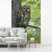 Fotobehang vinyl - Bruine bosuil op een tak in de boom breedte 235 cm x hoogte 350 cm - Foto print op behang (in 7 formaten beschikbaar)