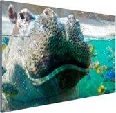 Nijlpaard Close-up met vissen Aluminium 60x40 cm - Foto print op Aluminium (metaal wanddecoratie)