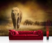"""Fotobehang """"Afrikaanse savanne"""" vliesbehang 300x210cm"""