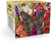 Butterfly Mix - 100x Bloembollen