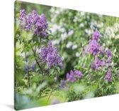 Close up van seringen Canvas 90x60 cm - Foto print op Canvas schilderij (Wanddecoratie woonkamer / slaapkamer)