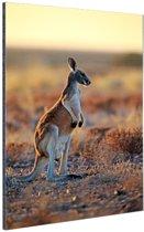 Staande rode kangoeroe Aluminium 40x60 cm - Foto print op Aluminium (metaal wanddecoratie)