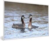 Foto in lijst - Een koppel roodhalsfuten in het water fotolijst wit 60x40 cm - Poster in lijst (Wanddecoratie woonkamer / slaapkamer)