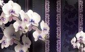 Fotobehang Bloemen, Orchideeën | Paars | 416x254