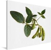Sojabonen tegen een witte achtergrond Canvas 40x30 cm - klein - Foto print op Canvas schilderij (Wanddecoratie woonkamer / slaapkamer)