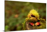 De groene herfstkleuren van de zoete tamme kastanje Aluminium 90x60 cm - Foto print op Aluminium (metaal wanddecoratie)