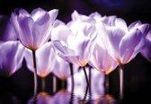 Fotobehang Flowers Poppies | XXXL - 416cm x 254cm | 130g/m2 Vlies
