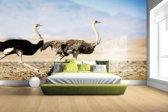 FotoCadeau.nl - Twee rennende struisvogels Fotobehang 380x265