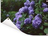 Duisternis om hortensia in een tuin Tuinposter 160x120 cm - Tuindoek / Buitencanvas / Schilderijen voor buiten (tuin decoratie) XXL / Groot formaat!