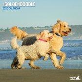 Goldendoodle Kalender 2020