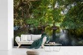 Fotobehang vinyl - Bomen in de wateren van het Nationaal park Lago de Camécuaro breedte 600 cm x hoogte 400 cm - Foto print op behang (in 7 formaten beschikbaar)