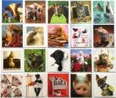 Verjaardagskaarten - Dieren - Set van 20