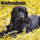Newfoundlander Kalender 2020