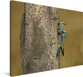 Een nest van twee grondscharrelaars in een boomgat Canvas 30x20 cm - klein - Foto print op Canvas schilderij (Wanddecoratie woonkamer / slaapkamer)