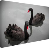 FotoCadeau.nl - Zwarte zwanen Canvas 30x20 cm - Foto print op Canvas schilderij (Wanddecoratie)