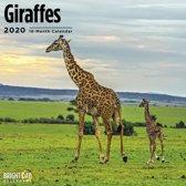 Giraffe Kalender 2020