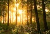 Fotobehang Light In The Forest|V8 - 368cm x 254cm|Premium Non-Woven Vlies 130gsm