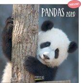 Kalender 2020 Panda's (30 x 30)
