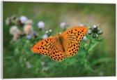 Plexiglas – Oranje Vlinder– 120x80 (Wanddecoratie op Plexiglas)