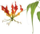 Fotobehang Flowers Forest Nature | XXXL - 416cm x 254cm | 130g/m2 Vlies