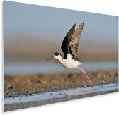 Wegvliegende steltkluut uit het water Plexiglas 180x120 cm - Foto print op Glas (Plexiglas wanddecoratie) XXL / Groot formaat!