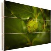 Beukennootje aan de boom Vurenhout met planken 90x60 cm - Foto print op Hout (Wanddecoratie)