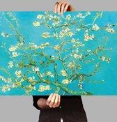 Poster Amandelbloesem - Vincent van Gogh