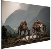 Ezels op een bergpad Aluminium 60x40 cm - Foto print op Aluminium (metaal wanddecoratie)