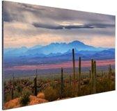 FotoCadeau.nl - Sonoran woestijn Mexico Aluminium 60x40 cm - Foto print op Aluminium (metaal wanddecoratie)