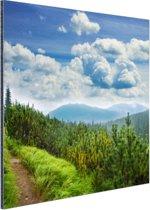 Een bospad in de bergen Aluminium 50x50 cm - Foto print op Aluminium (metaal wanddecoratie)