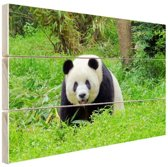 Grote panda in het gras Hout 60x40 cm - Foto print op Hout (Wanddecoratie)