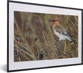 Foto in lijst - Pestvogel met een zwart besje in de bek fotolijst zwart met witte passe-partout klein 40x30 cm - Poster in lijst (Wanddecoratie woonkamer / slaapkamer)