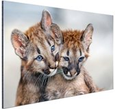 Twee poema welpen Aluminium 120x80 cm - Foto print op Aluminium (metaal wanddecoratie)