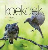 Koekoek