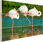 FotoCadeau.nl - Europese flamingos in het water Hout 120x80 cm - Foto print op Hout (Wanddecoratie)