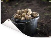 Vers geoogste aardappelen opgehoopt in een emmer Tuinposter 40x30 cm - klein - Tuindoek / Buitencanvas / Schilderijen voor buiten (tuin decoratie)