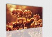 Hortensia 40x30cm, Canvas schilderij uitgerekt op het frame, 100% katoen, Wanddecoratie