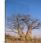 Baobabbomen in het Nationaal park Chobe Canvas 90x140 cm - Foto print op Canvas schilderij (Wanddecoratie woonkamer / slaapkamer)